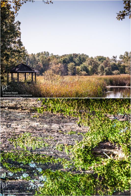 kandihamble-springbrook-last-1